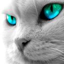 Профиль arctic_cat