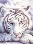 Профиль Тигра13