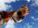 Профиль The_Horse_soul