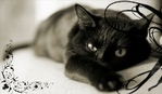 Профиль -Maleficenta-