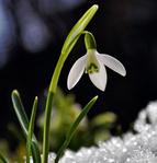Профиль Зеленая_Весна
