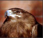 Профиль Eagle