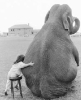 Профиль Elephant_Talk