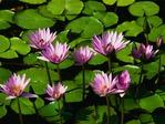 Профиль lilja