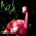 Профиль Flaminga