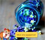 Профиль Aliona_26
