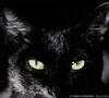 Профиль black_white_kat