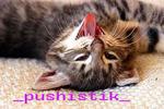 Профиль _pushistik_