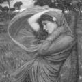 Профиль Witwe
