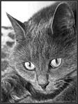 Профиль Животное_по_имени_Кошка