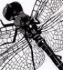 Профиль Mikrodragon-fly