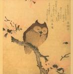 Профиль Sun-owl