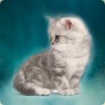 Профиль Сумеречный_котенок