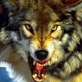 Профиль aka_Werwolf666