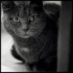 Профиль -кошки-