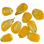 Профиль Гунька-кукуруза