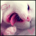 Профиль Katya_die_Katze