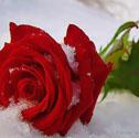 Профиль _Рыжая_соня