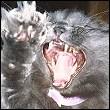 Профиль Wild_Grey_Cat