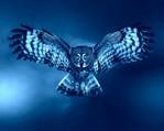 Профиль синяя_птаха