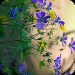 Профиль Цветущий_мир
