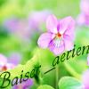 Профиль Baiser_aerien