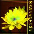 Профиль Хризантема_