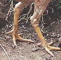 Профиль Пальцы ног