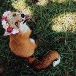 Профиль LIKE_FLOWER