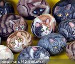 Профиль charm-cats