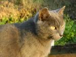 Профиль My_good_cat