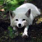 Профиль Silver_Foxy