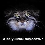 Профиль У_меня_здесь_не_рай