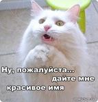 Профиль Оленна_Пирожкова