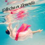 Профиль Collectus_ex_Elementis