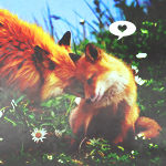 Профиль Arina_Fuchs
