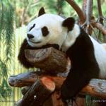 Профиль Evil_Panda