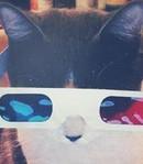 Профиль Gimpo-cat
