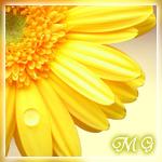Профиль Miraculous_girl