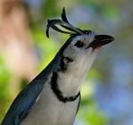 Профиль Curious_Bird