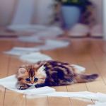 Профиль Котёнок_с_коготками