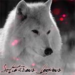 Профиль Solitarius_lupus
