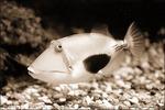 Профиль The_fishy