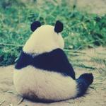 Профиль PandaDi