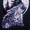 Профиль Волк-отшельник