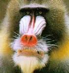 Профиль обезьян