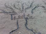 Профиль TreeLife
