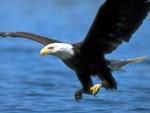Профиль eagle3