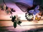 Профиль Lita_Butterfly