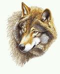 Профиль Sternbild_Wolf